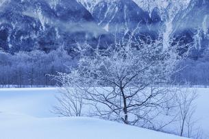 上高地_雪景色広がる風景の写真素材 [FYI04851531]