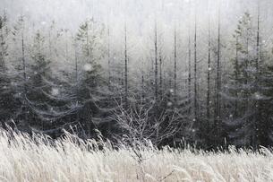 雪舞う霧ヶ峰の写真素材 [FYI04851545]
