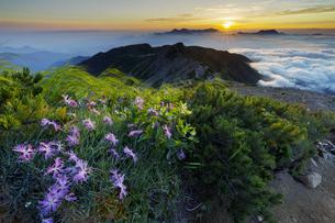 白馬岳稜線_小蓮華山手前からの日の出の写真素材 [FYI04851549]