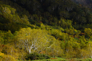 紅葉の栂池自然園の写真素材 [FYI04851554]