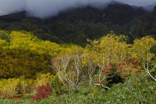 紅葉の栂池自然園の写真素材 [FYI04851555]