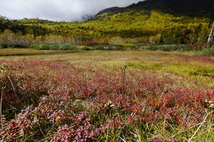 紅葉の栂池自然園の写真素材 [FYI04851556]
