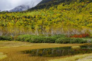 紅葉の栂池自然園の写真素材 [FYI04851557]