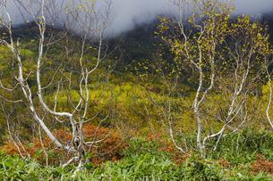 紅葉の栂池自然園の写真素材 [FYI04851558]