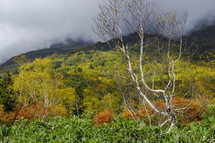 紅葉の栂池自然園の写真素材 [FYI04851559]