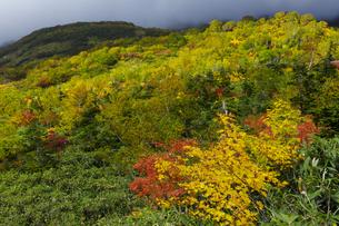 紅葉の栂池自然園の写真素材 [FYI04851560]