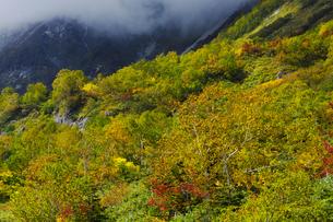 紅葉の栂池自然園の写真素材 [FYI04851561]