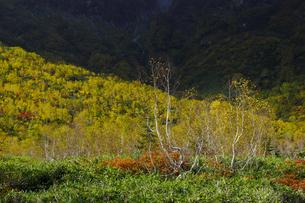 紅葉の栂池自然園の写真素材 [FYI04851562]