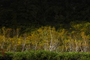 寸光射す紅葉の栂池自然園の写真素材 [FYI04851563]