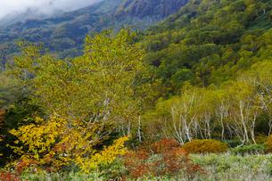 紅葉の栂池自然園の写真素材 [FYI04851564]