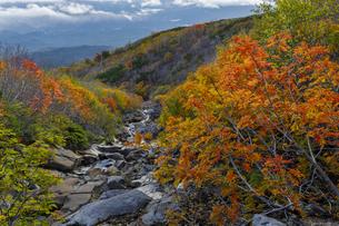 木曽・御嶽山からの紅葉の写真素材 [FYI04851568]