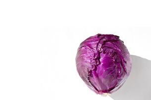 レッドキャベツ 紫キャベツの写真素材 [FYI04851576]
