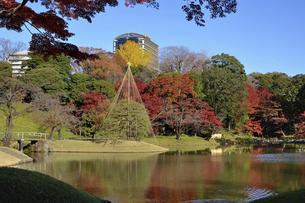 秋の小石川後楽園の写真素材 [FYI04851737]