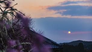 月ヶ瀬梅林の写真素材 [FYI04852132]