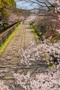 桜の季節の蹴上インクラインの写真素材 [FYI04852182]