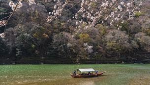 京都 桜の季節の嵐山と屋形船の写真素材 [FYI04852232]