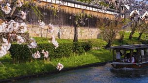 京都 桜の季節の伏見 の写真素材 [FYI04852249]