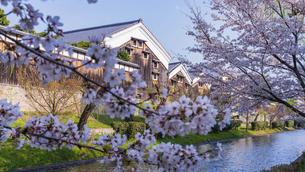 京都 桜の季節の伏見 の写真素材 [FYI04852250]