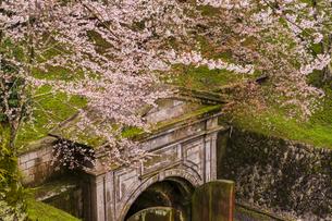滋賀 桜と琵琶湖疏水の写真素材 [FYI04852348]