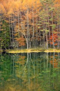 長野県 御射鹿池の写真素材 [FYI04852437]