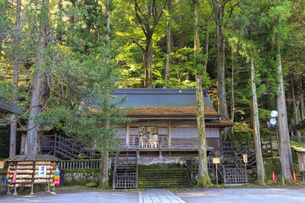 長野県 諏訪大社 上社本宮 拝殿の写真素材 [FYI04852460]