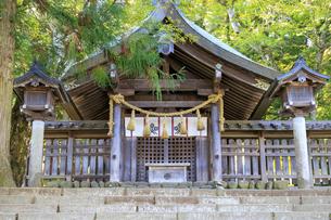 長野県  諏訪大社・上社前宮  拝殿の写真素材 [FYI04852477]