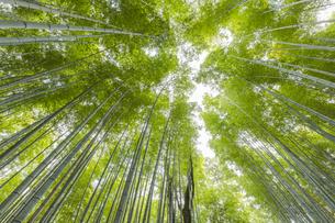 京都竹林の小径の写真素材 [FYI04852781]