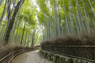 京都竹林の小径の写真素材 [FYI04852782]