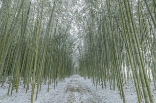 冬のかぐや姫の散歩道の写真素材 [FYI04852791]
