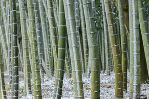冬のかぐや姫の散歩道の写真素材 [FYI04852798]