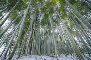 冬のかぐや姫の散歩道の写真素材 [FYI04852801]