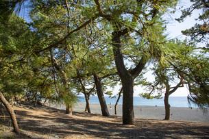 三保の松原の松林と三保海岸の写真素材 [FYI04853160]