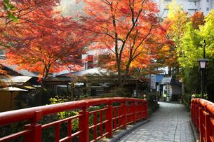 修善寺温泉の紅葉と桂橋の写真素材 [FYI04853238]