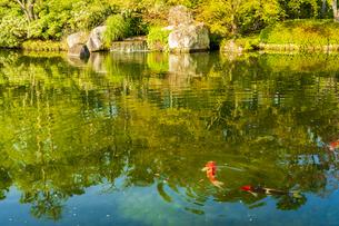 姫路城 好古園の写真素材 [FYI04853296]