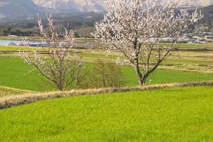 早春の南阿蘇村の写真素材 [FYI04853304]