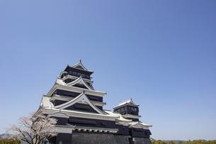 熊本城と桜の写真素材 [FYI04853315]