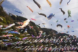 杖立温泉鯉のぼり祭りの写真素材 [FYI04853327]