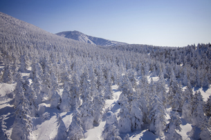 蔵王の樹氷の写真素材 [FYI04853374]