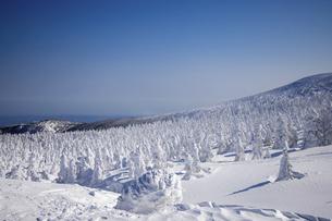 蔵王の樹氷の写真素材 [FYI04853409]