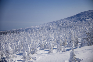 蔵王の樹氷の写真素材 [FYI04853410]