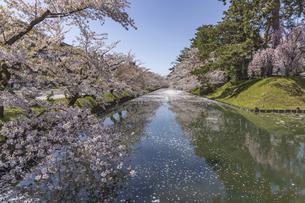 弘前公園の桜の写真素材 [FYI04853453]