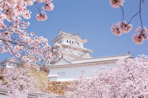 桜と姫路城の写真素材 [FYI04853460]