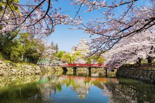 桜と姫路城の写真素材 [FYI04853463]