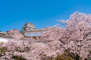 桜と姫路城の写真素材 [FYI04853483]