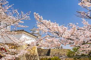 桜と姫路城の写真素材 [FYI04853509]