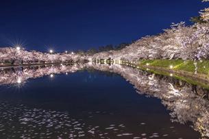 弘前公園の桜 ライトアップの写真素材 [FYI04853533]