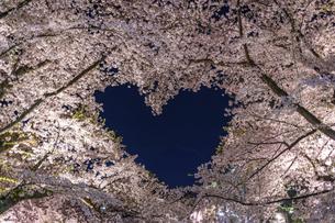弘前公園のハート桜 ライトアップの写真素材 [FYI04853534]