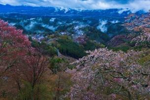 吉野山の桜と雲海の写真素材 [FYI04853544]
