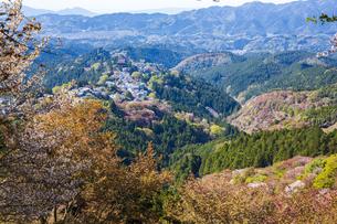 吉野山の桜の写真素材 [FYI04853554]