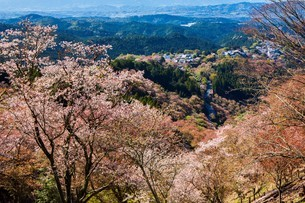 吉野山の桜の写真素材 [FYI04853557]